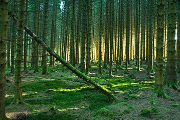 Wood at Leaplish.jpg