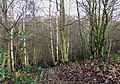 Wooded Claypits near Kingswinford, Staffordshire - geograph.org.uk - 643001.jpg