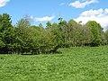 Woodland, Kelloe - geograph.org.uk - 532864.jpg