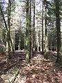 Woodland, Rottal - geograph.org.uk - 440565.jpg
