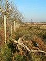 Woodland Edge - geograph.org.uk - 700411.jpg