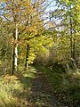 Woodland Path - geograph.org.uk - 594640.jpg