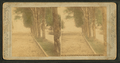 Woodward Avenue from Grand Circus Park, from Robert N. Dennis collection of stereoscopic views.png