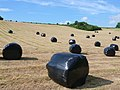 Wrapped bales, Higher Wraxall - geograph.org.uk - 843933.jpg