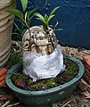 Wrapped statue plant.jpg