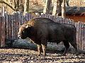 Wrocław - Zoo 09.JPG