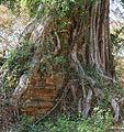 Yeai Poeun Temple group S en 2014 (3).jpg