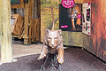 ZSL London - Leaping tiger sculpture (01).jpg