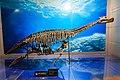 Zigong Dinosaur Museum Bishanopliosaurus.jpg