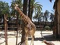 Zoobotánico Jerez (68).JPG