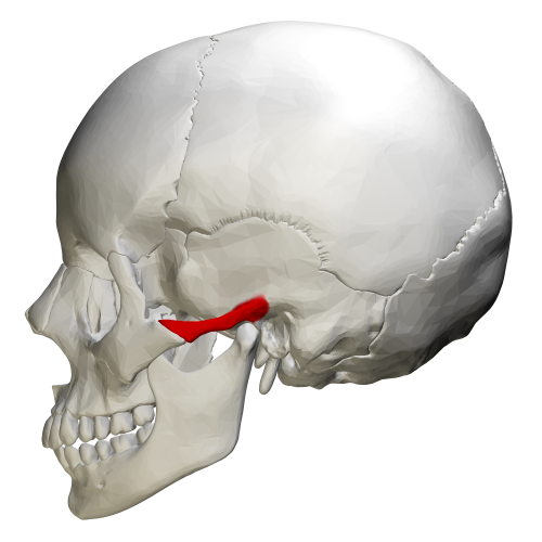 zygomatic process of temporal bone - wikiwand, Human Body