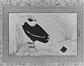 """Great Hornbill"", Folio from the Shah Jahan Album MET 159449.jpg"