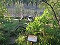 """""""Park Dinozaurów"""" Nowiny Wielkie, Poland - (http-www.park-dinozaurow.pl-) - panoramio (55).jpg"""