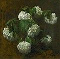 'White Hydrangeas' by Victoria Dubourg Fantin Latour.jpg