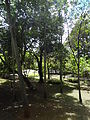 (Jardín Botánico de Quito) pic bb8a6.JPG