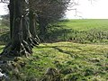 (The line of) Hadrian's Turf Wall and its north defensive ditch, and the Vallum, at Appletree - geograph.org.uk - 1354816.jpg