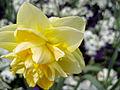 +000002 Image Blumen und Blüte.jpg
