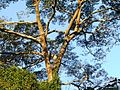Árvore - panoramio (1).jpg