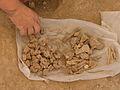 Çatalhöyük 2006 IMG 2185 (207459655).jpg