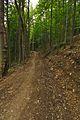 Červený turistický chodník mezi Novou Sedlicou a Temným vrškom, Národný park Poloniny (03).jpg