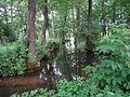 Ścieżka wokół jeziora Jaczno, przy ruinach młyna... - panoramio.jpg