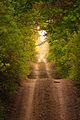 Šuma u Deliblatskoj peščari, Dubovac.jpg