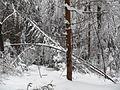 Žled v Sloveniji februarja 2014 7.JPG