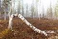 Весенние туманы.jpg