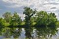 Гнілецька верба, на березі озера Гнилуша.jpg