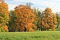 Екатерининский парк в Царском Селе 2H1A2789WIR.jpg