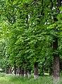 Лизогубівський (Седнівський) парк.jpg