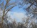 Небо на лыжной прогулке. База отдыха Ладья. Самара. Январь 2011 - panoramio.jpg