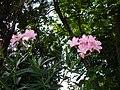 Нікітінський ботанічний сад, квіти41.jpg