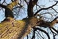 Орлівщанські дубові насадження-4.jpg