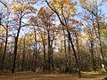 Осень в лесу - panoramio (4).jpg