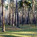 Особо охраняемая природная территория местного значения «Черняевский лесопарк», Пермь - panoramio (2).jpg