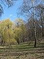 Парк «Нивки» (східна частина) IMG 5196.jpg