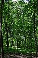 Парк Берёзовая роща в Киеве. Фото 23.jpg