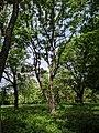 Парк Глібова, Веселий Поділ, 03.jpg