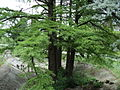 Парк шума Гази Баба во мај (126).JPG