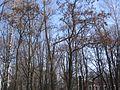 Парк - panoramio (235).jpg