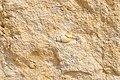 Раковина скам'янілого викопного молюска в юрському вапняку.jpg