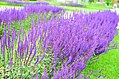 Система цветочных партеров.jpg