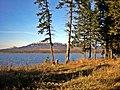 Тайга у кромки озера.jpg