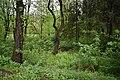 Трускавецький парк 20.jpg
