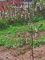 עץ סוכריות במשמר השרון.jpg