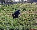 الزراعة في اللثامة.JPG