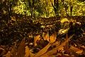 پاییزدر ایران-قاهان قم-Autumn in iran-qom 13.jpg