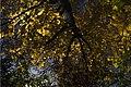 پاییزدر ایران-قاهان قم-Autumn in iran-qom 32.jpg