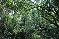 খাদিমনগর জাতীয় উদ্যান 05.jpg